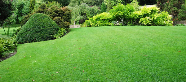 Lawn and plants