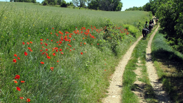 Red flowers horse trail