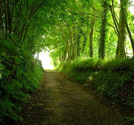 Trees footpath