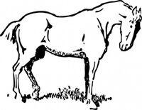 Small-eyed-horse-clip-art 425682