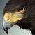 Hawk9211