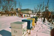 Iarna in stupina 2
