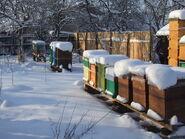 Iarna in stupina; 2011-2012