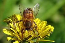 Wikia-Visualization-Main,beekeeping