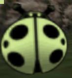 The Tenth Ladybug