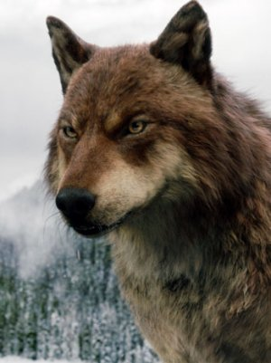 Jacob-wolf