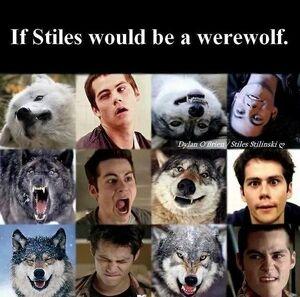 Stiles-wolf