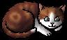 Redcloud.kitten