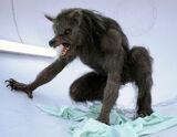 Werewolf (BBC)