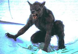 Werwolf33f