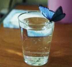 Believe-Wiki Blue-Butterfly 02