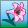 Lily-pink