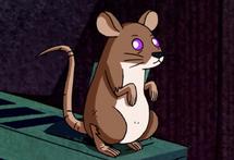Rata viscosa
