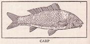 Carp Page 508
