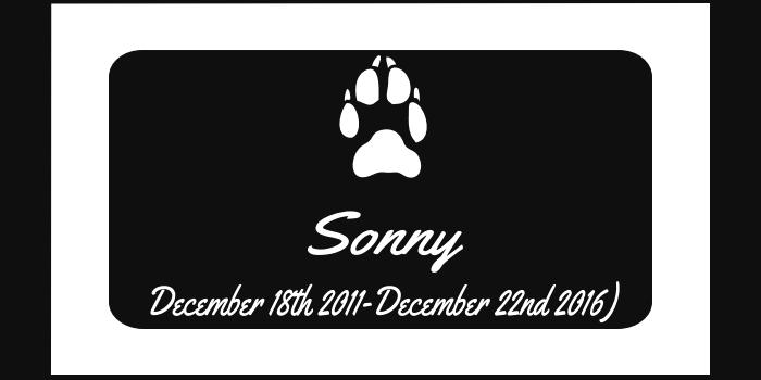 Sonny-