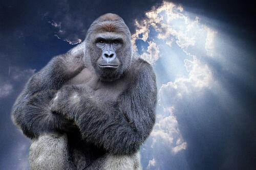 27-harambe-gorilla-heaven.w710.h473.2x