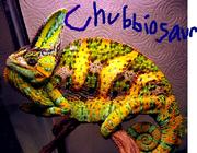 Chubbiosaur