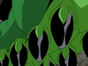 Wildvine Seed Bombs