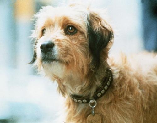 higgins (dog)