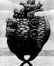 Manga E83 IoE Core