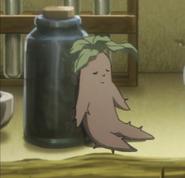 Mandrágora (anime)