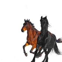 Old Town Road (Remix) cover