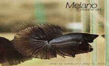 Melano2May15 2005 large