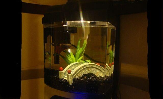 File:Fish Tank.jpg