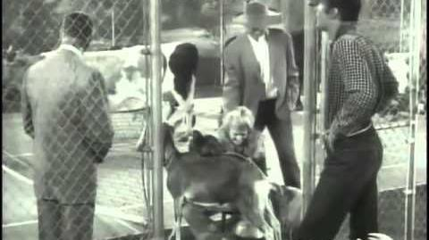 The Beverly Hillbillies Season 1 episode 5 - Jed Buys Stock