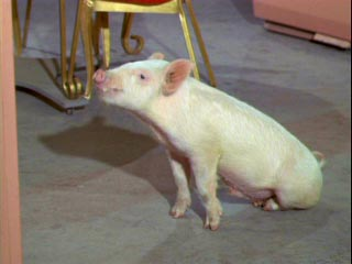 Image result for pig from green acres images