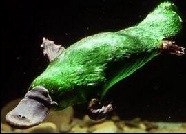 Green platypus beast