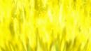 Beyblade Burst Chouzetsu Screw Trident 8Bump Wedge avatar