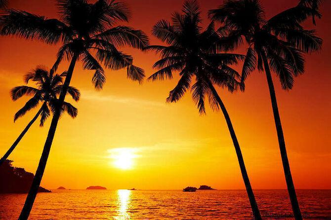 Sonnenuntergang-palmen-strand