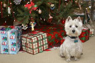 Pies i prezenty-995