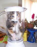 Kot w mikserze