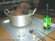 Pies po chińsku