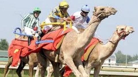 Camel Racing in Dubai, United Arab Emirates