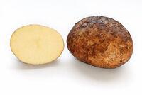 Przekrój ziemniaka