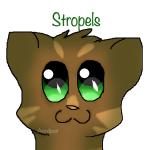 Stropels