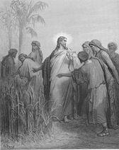 Dore 41 Mark02 The Disciples Pick Corn on the Sabbath