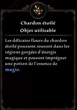 Chardon étoilé