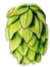 Hopfen Icon