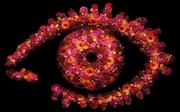 BB20 Eye