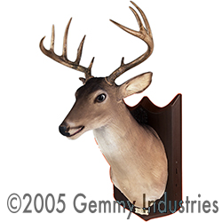 File:Big-Buck.jpg