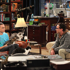 Leonard talks to Sheldon about his cat and the loss of Amy.