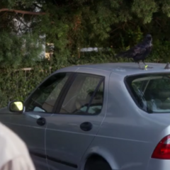 Crows on his car.