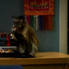 Amy's smoking monkey.