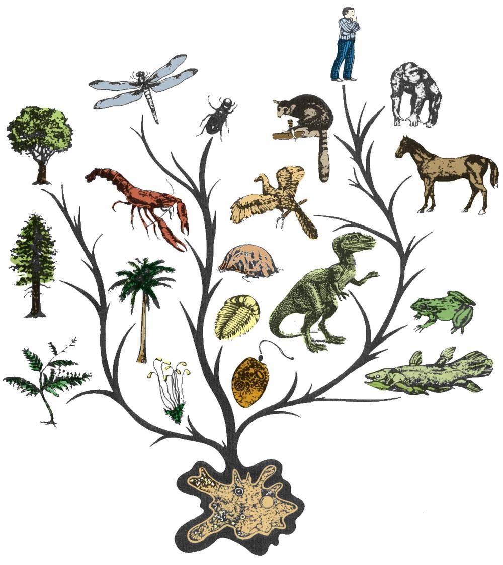 Картинки по запросу theory evolution