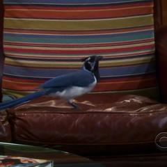 Lovey-Dovey on Sheldon's seat.