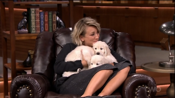 File:Puppy7.png